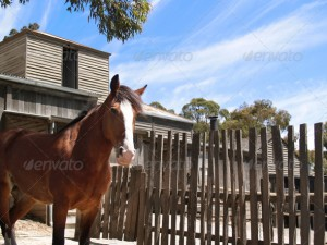 Brown, Fenced Horse - Stock Photo | PhotoDune